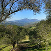 View of Mt Diablo along Volvon Trail. <br /> Morgan Territory Regional Reserve <br /> 29 Jan 2015