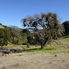 Morgan Territory Regional Reserve <br /> Close to Parking Lot/Trail Heat <br /> 24 Jan 2015