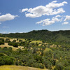 Mt. Diablo State Park, CA <br /> Jun. 5, 2014