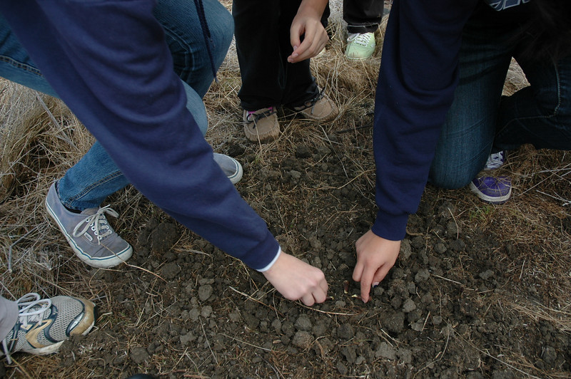 Northgate students plant their acorns.