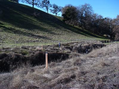 Restoring Oaks and Buckeyes at Irish Canyon