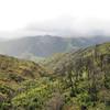 Save Mount Diablo - 2015 Bioblitz<br /> Morgan Fire Footprint. <br /> Rhine Canyon.