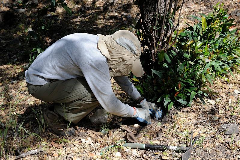 Save Mount Diablo - 2015 Bioblitz<br /> Morgan Fire Footprint <br /> April 23, 2015<br />  Carol Lane