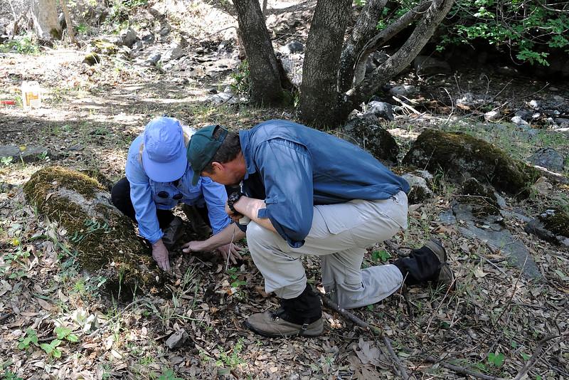 Save Mount Diablo - 2015 Bioblitz<br /> Morgan Fire Footprint <br /> April 23, 2015<br /> Kip Will (Associate Professor, Director, Essig Museum of Entomology at UC Berkeley). <br /> Kathy Roth