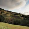 Save Mount Diablo - 2015 Bioblitz<br /> Morgan Fire Footprint