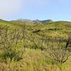 Save Mount Diablo - 2015 Bioblitz<br /> Morgan Fire Footprint. <br /> Rhine Canyon Road.