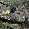 Save Mount Diablo - 2015 Bioblitz<br /> Morgan Fire Footprint <br /> April 23, 2015<br /> Kip Will (Associate Professor, Director, Essig Museum of Entomology at UC Berkeley). <br />  Carol Lane