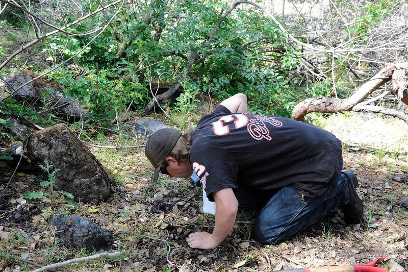 Save Mount Diablo - 2015 Bioblitz<br /> Morgan Fire Footprint <br /> April 23, 2015<br />  William Thomas