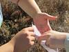 Many hands make light work of Epilobium canum seeds.