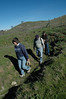 Wllow-counting team takes census of planted poles--about 41.