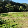 VIEW 2 - Nov. 3, 2016 <br /> SMD Big Bend (Marsh Creek 8) <br /> Baseline photos for flood plain <br /> restoration project .  <br /> Save Mount Diablo's Diablo Restoration Team (DiRT) and Stewardship workday.