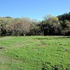 VIEW 4 - Nov. 17, 2016 <br /> SMD Big Bend (Marsh Creek 8). <br /> Baseline photos for West flood plain <br /> after tree planting on Nov. 5, 2106. <br /> Save Mount Diablo's Diablo Restoration Team (DiRT).