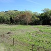 VIEW 4 - Nov. 3, 2016 <br /> SMD Big Bend (Marsh Creek 8) <br /> Baseline photos for flood plain <br /> restoration project .  <br /> Save Mount Diablo's Diablo Restoration Team (DiRT) and Stewardship workday.