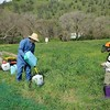 Save Mount Diablo <br /> Integrated Pest Management Workday <br /> Big Bend (Marsh Creek 8) <br /> March 11, 2017