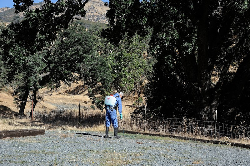 IPM Workday - Curry Canyon Ranch <br /> Save Mount Diablo <br /> June 28, 2017