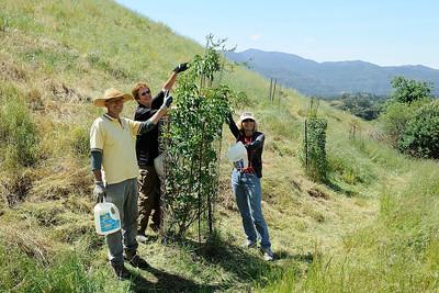 Irish Canyon - Riparian tree restoration project