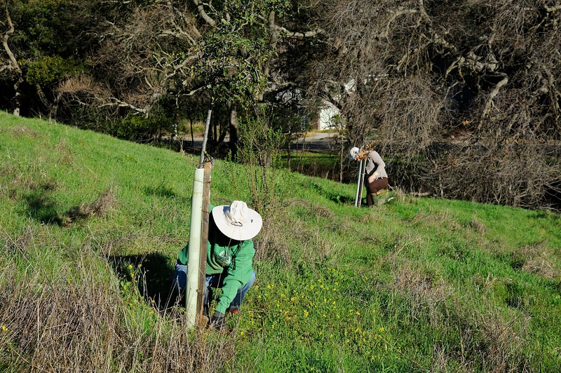 IPM Workday - Lot 25 <br /> Jan. 14, 2017 <br /> Save Mount Diablo