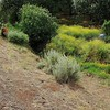 IPM Workday<br /> The springs at Mangini Ranch property. <br /> Save Mount Diablo <br /> May 24, 2017