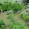 IPM Workday<br /> The springs at Mangini Ranch property. <br /> Save Mount Diablo <br /> April 26, 2017