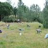 Diablo Restoration Team (DiRT). <br /> Save Mount Diablo workday. <br /> Marsh Creek  6. <br /> May 6, 2017