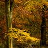 Savernake Forest 10