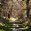 Savernake Forest 7