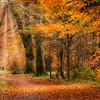 Savernake Forest 6