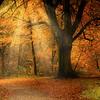 Savernake Forest 4