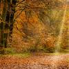 Savernake Forest 2