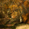 Savernake Forest 11