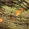 Savernake Forest 3