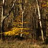 Savernake Forest 8