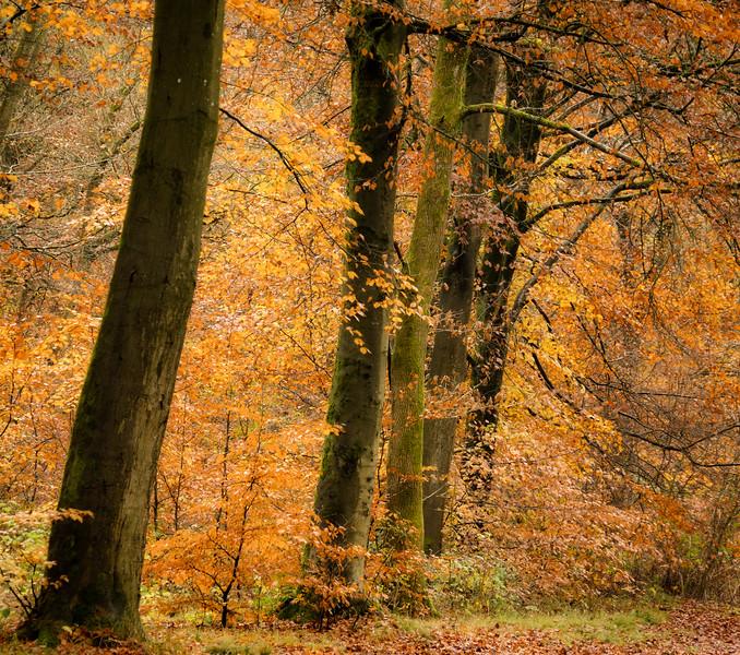 Savernake Forest 1