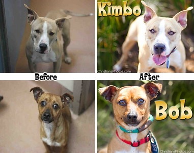 I met Kimbo and Bob at San Diego Animal Control during a OnePictureSaves.com workshop!