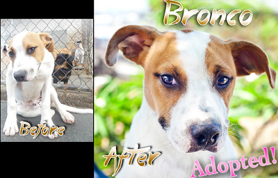 Bronco was a staff favorite at Hawaii Island Humane Society!