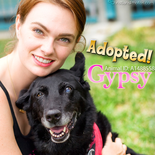 Sweet senior pup Gypsy cuddle puppin' with ModelsNMutts.com during our shelter shoot:)