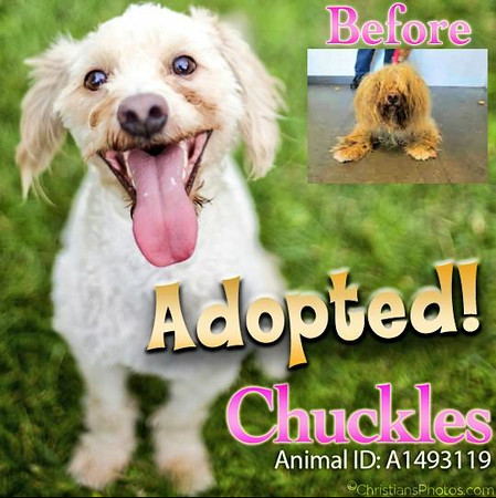 Chuckles had even more to chuckle about after a good grooming by the good folks at West Valley Shelter in Chatsworth!