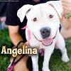 Adopt Angelina at www.WagsAndWalks.org!