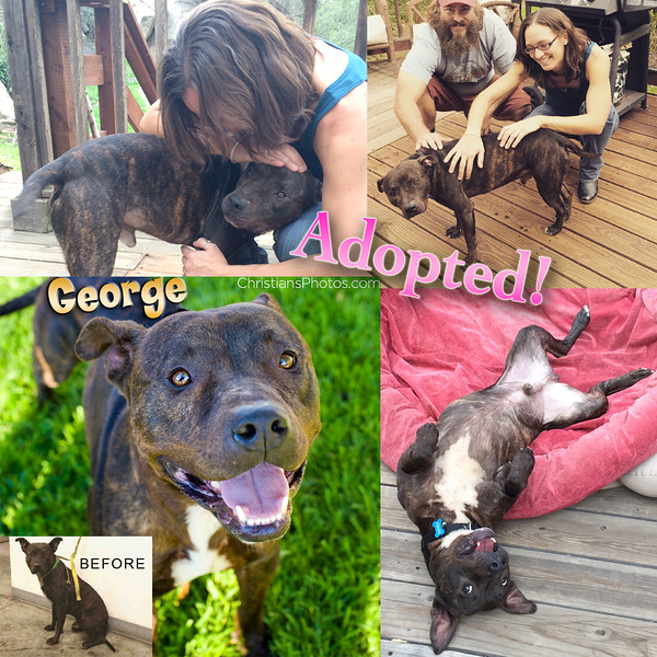 George was rescued from the shelter by a dedicated volunteer who also found him the perfect furever him!