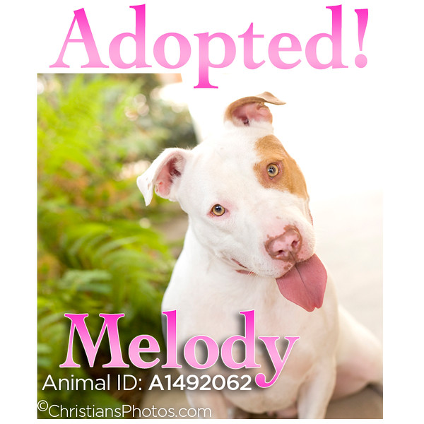 Sweet and beautiful Melody was on the 'red alert' list at the shelter until her new photo was shared! #OnePictureSaves