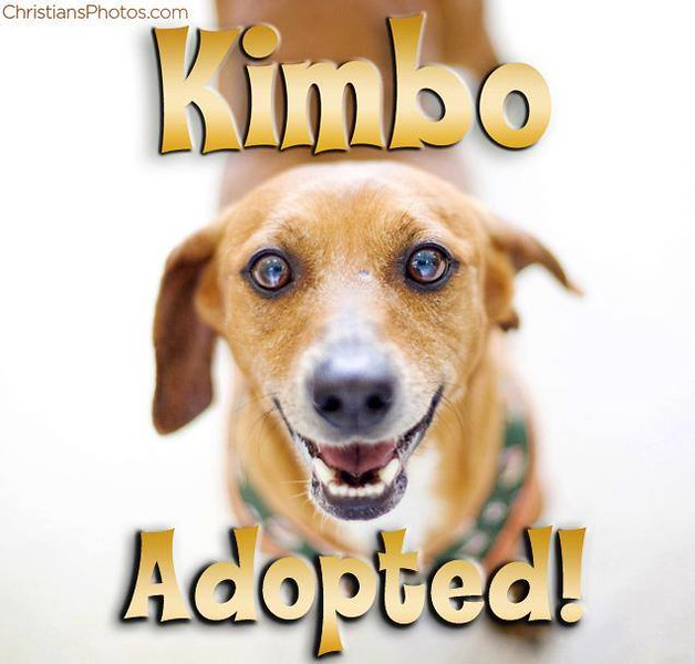 Kimbo was adopted with his bonded pal Nike!  Happy tails!