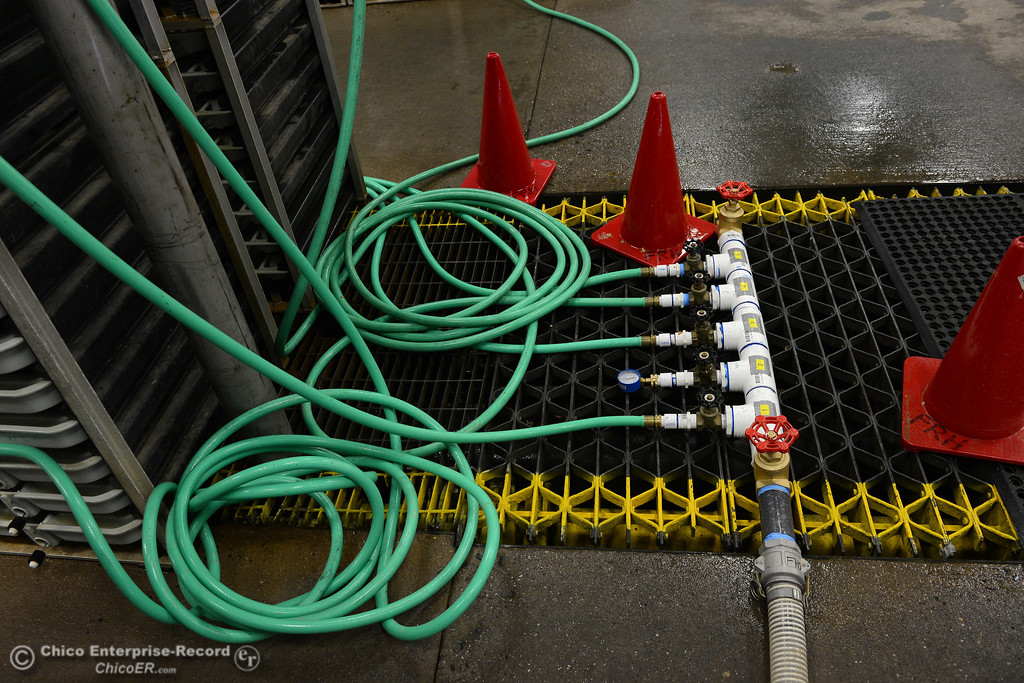 . Clint Garman shows how the scientists at the Feather River Fish Hatchery engineered creative ways to save the fish Saturday, Feb. 18, 2017, in Oroville, California, including this setup that has garden hoses taking filtered water to the eggs and fry in tray at the hatchery. (Dan Reidel -- Enterprise-Record)