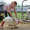BEN MIKESELL | THE GOSHEN NEWS<br /> Hayden Hilty-Cable, 10, of Nappanee, guides her turkey to the weighing station at the poultry barn.