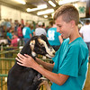BEN MIKESELL | THE GOSHEN NEWS<br /> Wyatt Miller, 14, of Middlebury, plays with his goat Gilbert prior to their show Monday afternoon.