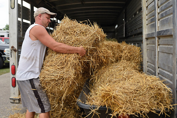 BEN MIKESELL | THE GOSHEN NEWS<br /> Ryan Yoder of Shipshewana pulls straw out of a trailer while setting up his family's space at the dairy barn Thursday at the Elkhart County 4-H Fairgrounds.