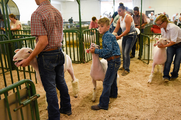 BEN MIKESELL | THE GOSHEN NEWS<br /> Tate Granburg, 9, of Middlebury, ready to show his dorset market lamb.