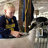 BEN MIKESELL | THE GOSHEN NEWS<br /> Paige Simmons, 16, of Syracuse, in the 4-H sheep barn.