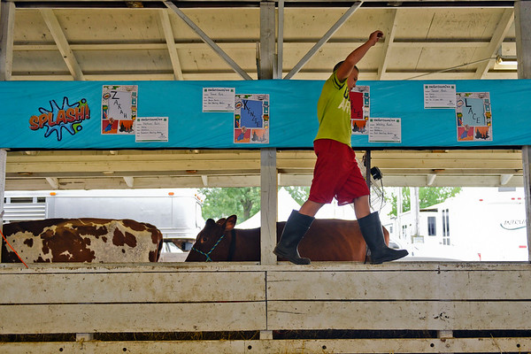 BEN MIKESELL | THE GOSHEN NEWS<br /> Tanner Rush, 11, of Goshen, keeps his balance walking around the dairy barn Thursday morning at the Elkhart County 4-H Fairgrounds.