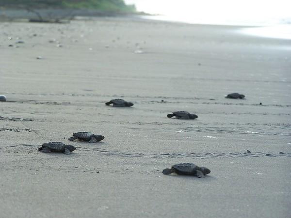 Sea Turtle protection program, Hacienda Baru.