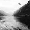 Gulls, rain, mountains, Sognefjord, Norway